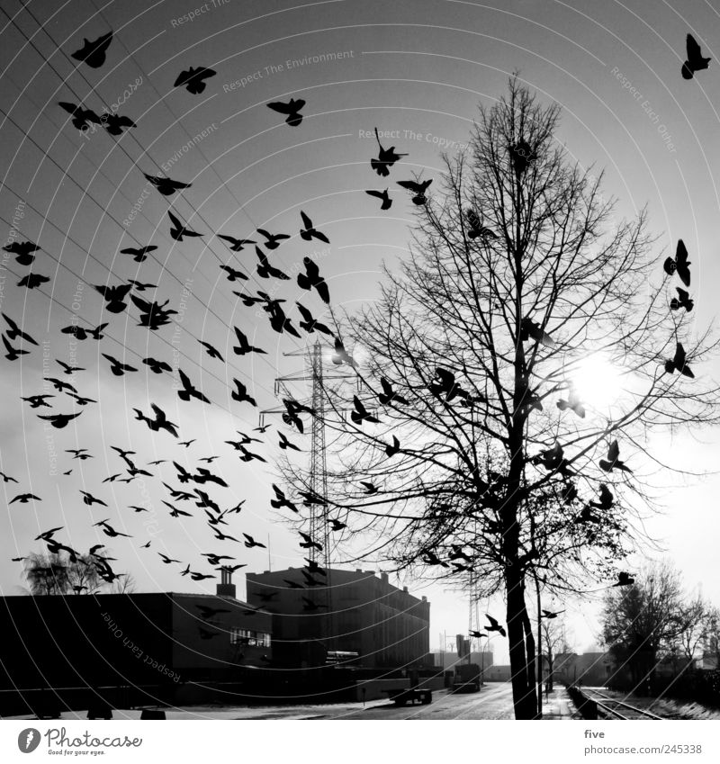 Sky Nature Tree Plant Sun Vacation & Travel House (Residential Structure) Street Bird Flying Trip Hamburg Wing Group of animals Factory Infinity