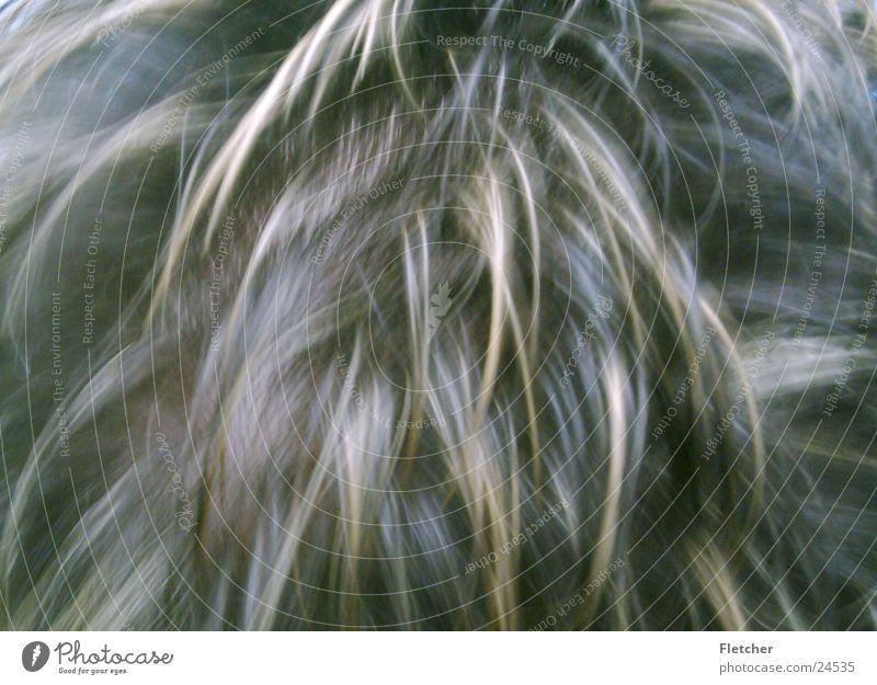 hair Strand of hair Pelt Shock of hair Hair and hairstyles Blonde Dark Brown Man splendid hair