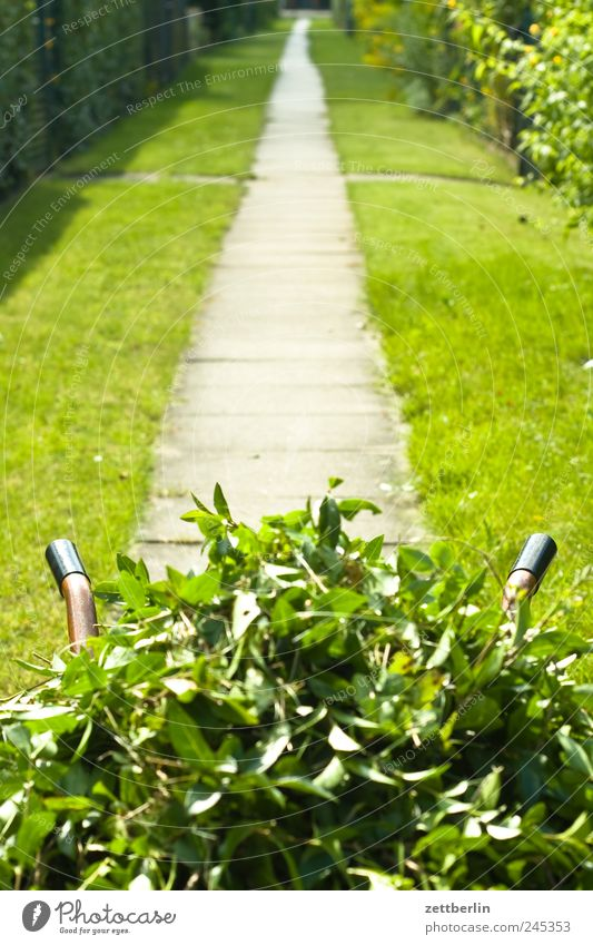 hedge trimming Summer Garden Work and employment Gardening Services Environment Nature Landscape Plant Beautiful weather Leaf Blossom Lanes & trails Growth