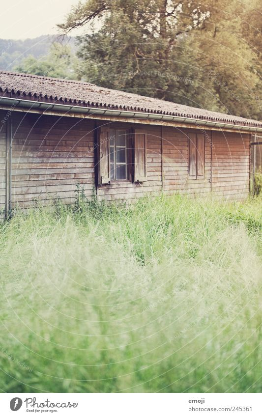 fairy tales Nature Grass Meadow Hut Window Old Wooden board Wooden house Natural Colour photo Exterior shot Deserted Copy Space bottom Day