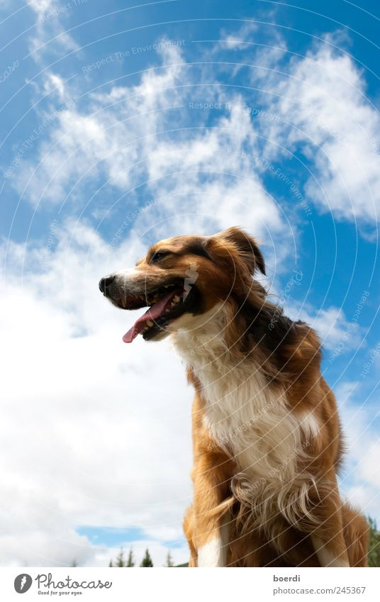 dOgsday Nature Animal Pet Dog 1 Freedom Breathe Colour photo Exterior shot Deep depth of field Worm's-eye view Animal portrait Looking away