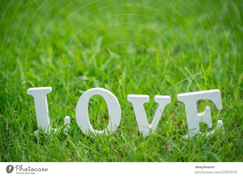 Love letter is placed Backyard and green grass Style Design Decoration Feasts & Celebrations Wedding Grass Cloth Simple Bright Retro Yellow Green Emotions