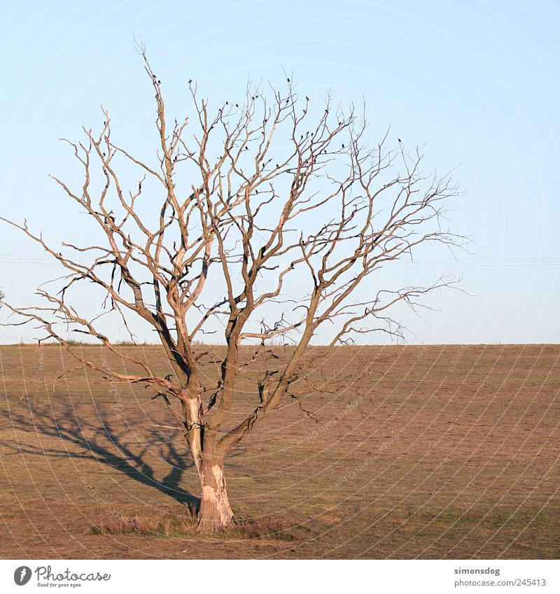 tree Environment Nature Plant Animal Horizon Summer Autumn Warmth Drought Tree Wild plant Bird Old To dry up Dry Loneliness Uniqueness Stagnating Death