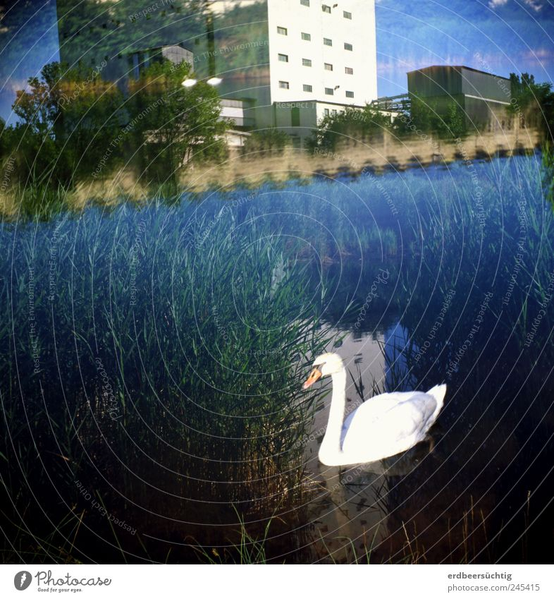 Nature Water Blue Summer Landscape Building Environment Coast Bird Swimming & Bathing River Bushes Factory Harbour Common Reed Double exposure
