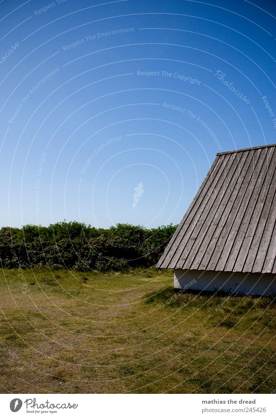 Nature Blue Beautiful Tree Plant Summer House (Residential Structure) Wall (building) Environment Landscape Grass Wall (barrier) Building Air Small Horizon