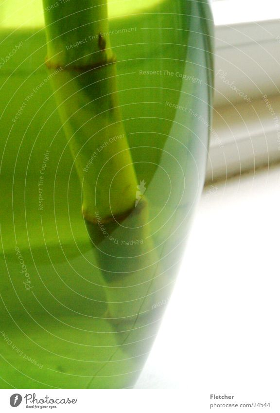 Green Plant Round Living or residing Transparent Half Pot Vase