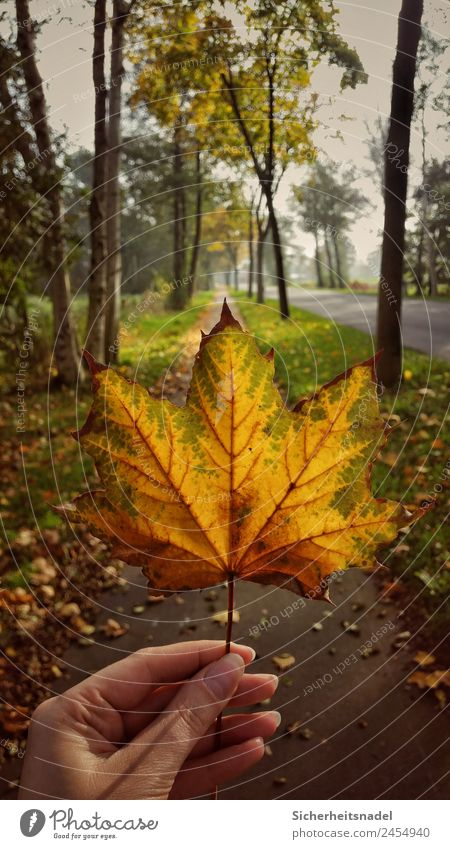 Nature Plant Tree Leaf Warmth Autumn Beautiful weather Maple leaf Maple tree Country life Deciduous tree