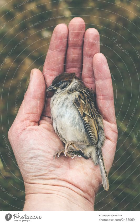 Poor sparrow Nature Dead animal Bird Sparrow 1 Animal Sadness Small To console Grief Death Colour photo Exterior shot Day