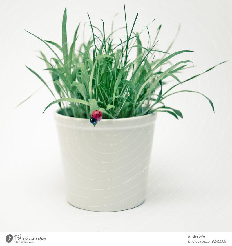 White Green Beautiful Plant Grass Happy Bright Design Simple Considerable Beetle Ladybird Flowerpot Foliage plant Minimalistic