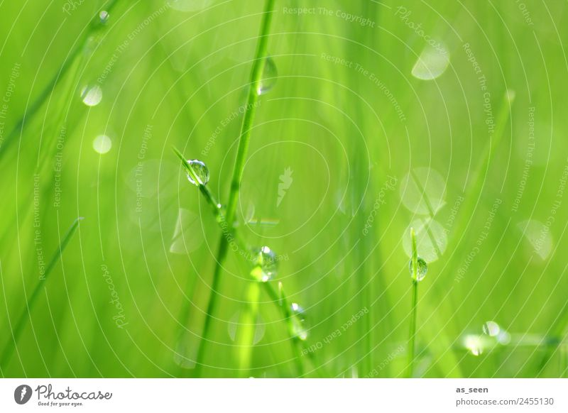 Dance of the drops Lifestyle Wellness Harmonious Spa Garden Environment Nature Plant Water Drops of water Spring Summer Climate Rain Grass Foliage plant Touch