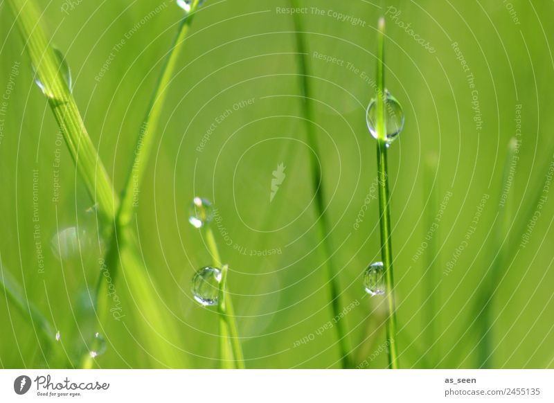 Pearls in the grass Healthy Health care Wellness Life Senses Spa Garden Environment Nature Plant Water Drops of water Spring Summer Climate Grass Leaf