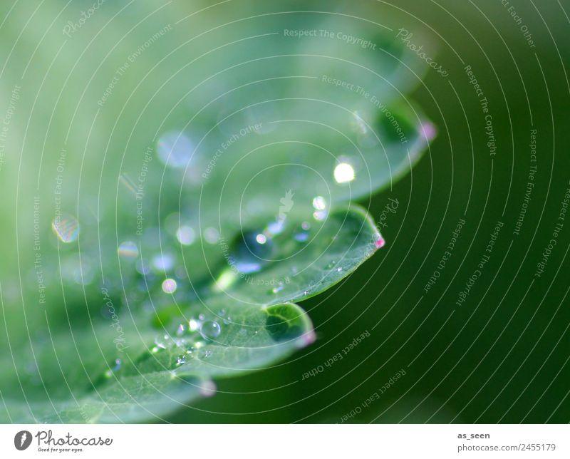 Dew drops on leaf Design Life Harmonious Senses Calm Garden Environment Nature Plant Water Drops of water Spring Summer Rain Leaf Foliage plant Glittering