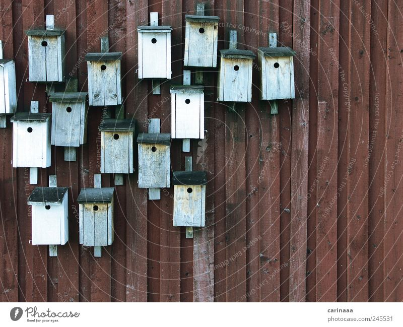 bird house Nature Landscape Summer Animal Bird Wood To feed Sleep Simple New Clean Blue Brown Gray Red Black White Chaos Relaxation Environmental protection