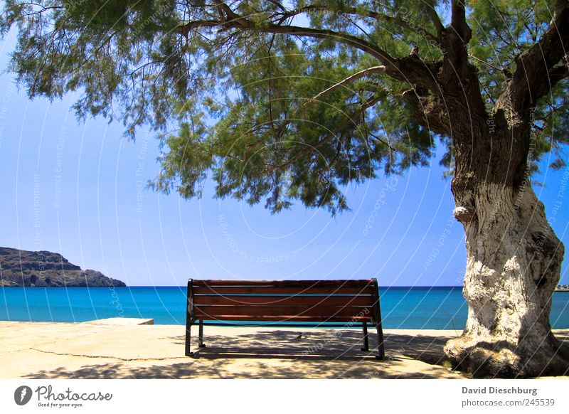 favourite place Vacation & Travel Far-off places Summer Summer vacation Beach Ocean Island Landscape Water Cloudless sky Horizon Beautiful weather Plant Tree