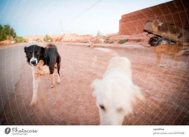 dogs Animal Pet Dog 2 3 Group of animals Walking Running Curiosity Joy Movement Discover Leisure and hobbies Friendship Joie de vivre (Vitality)