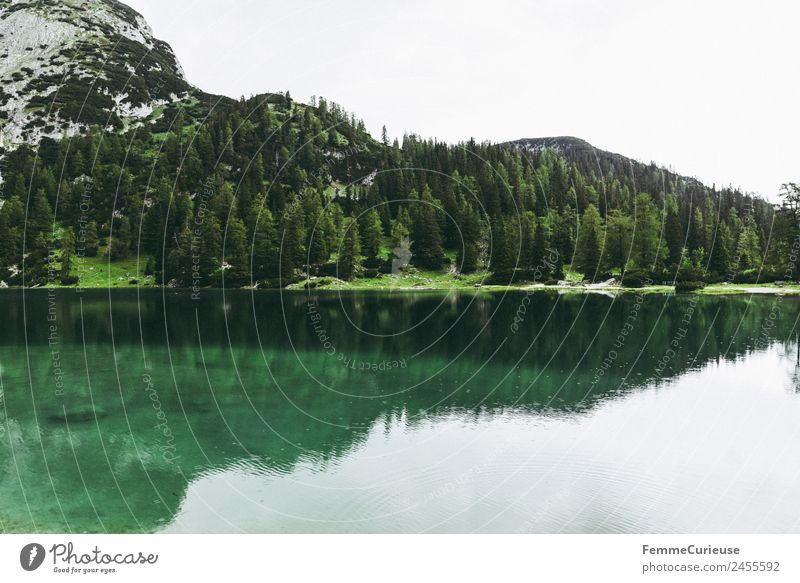 Beautiful cristal clear mountain lake in the alps Nature Landscape Idyll Mountain lake Alps Coniferous trees Coniferous forest Clarity Turquoise Lake