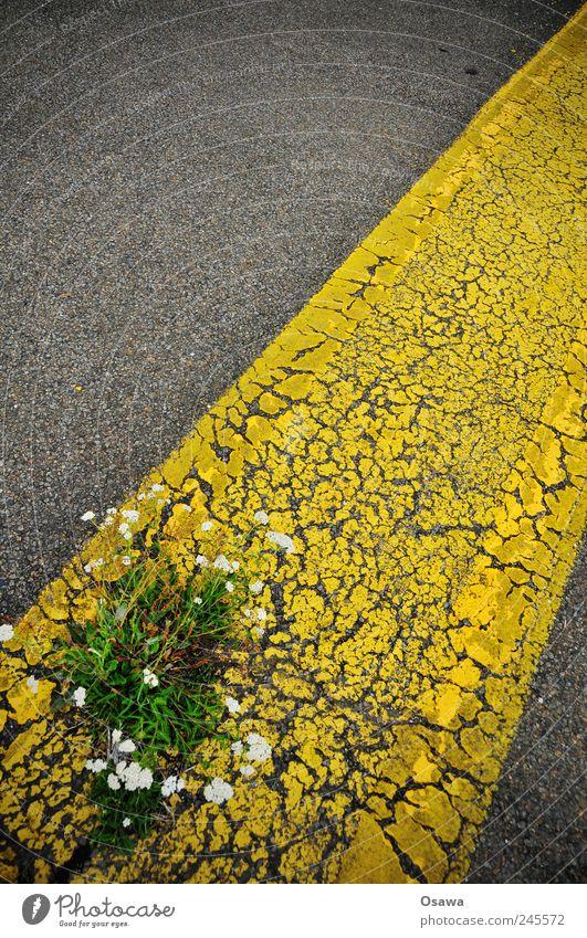 urban green Street Tar Asphalt Gray Black Yellow Lane markings Line Stripe Diagonal Old Derelict Weathered Plant Flower Weed Blossom Resist Power Force Defiant