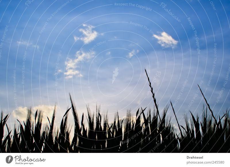 Sky Nature Plant Blue Summer Clouds Calm Black Environment Meadow Grass Horizon Dream Field Belief Peace
