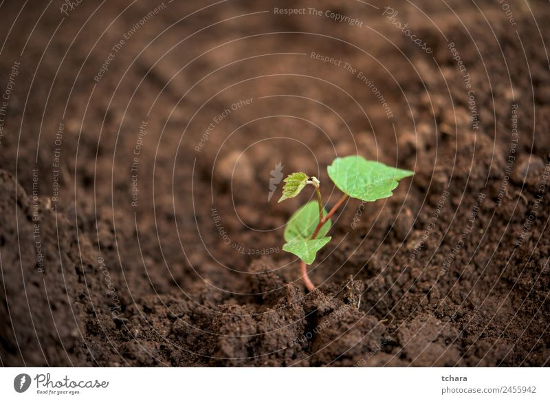 New life Vegetable Coffee Money Life Garden Gardening Financial Industry Business Environment Nature Plant Earth Spring Tree Leaf Growth Fresh Small Natural