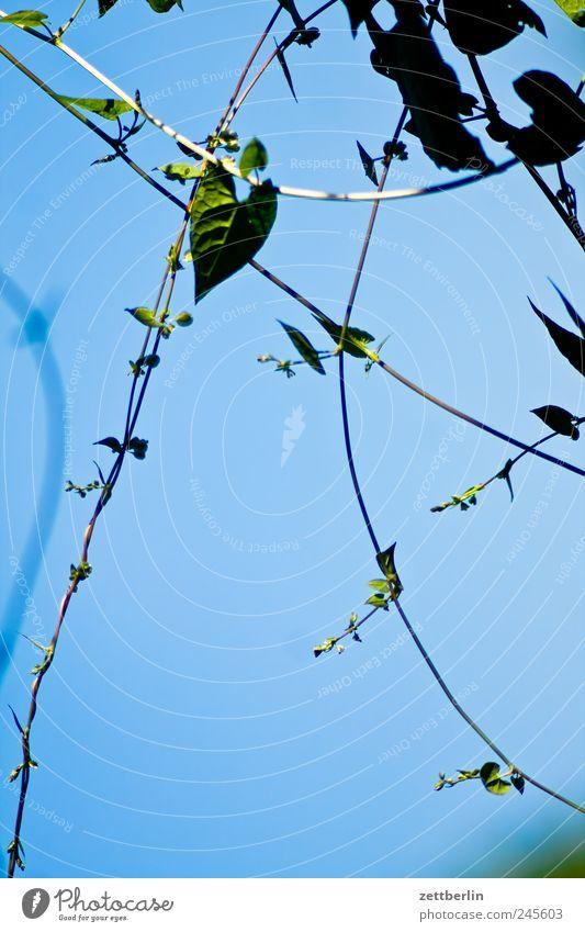 Sky Plant Flower Leaf Blossom Garden Heart Growth Tendril Garden plot Heart-shaped Garden allotments