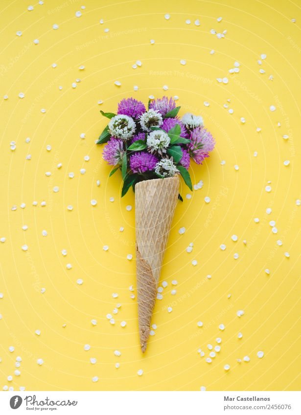Ice cream cone with flowers on yellow background Summer Plant Colour Beautiful Green Flower Red Leaf Blossom Natural Grass Art Garden Herbs and spices Write