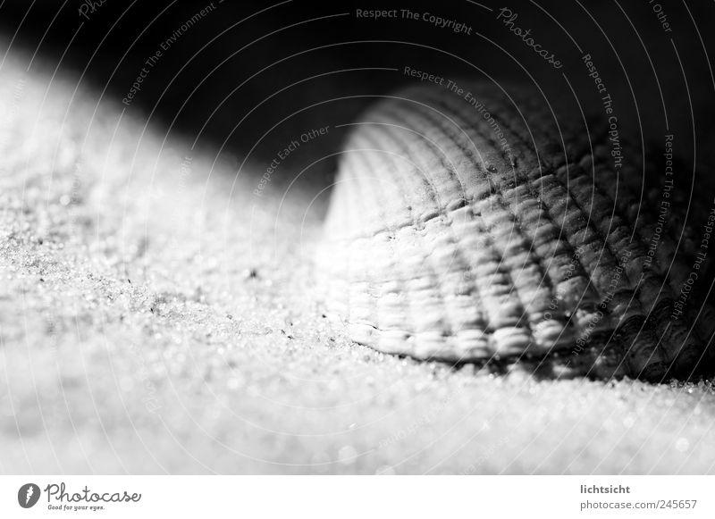 semi-shade Environment Nature Sand Coast Beach North Sea Baltic Sea Ocean Island Black White Mussel Mussel shell Close-up Grain of sand Penumbra Contrast Groove