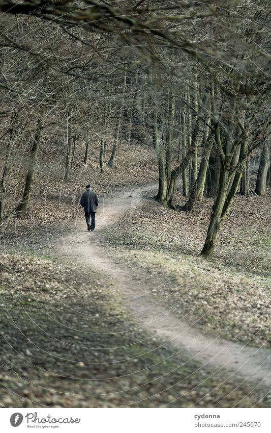 Lonely walker Lifestyle Well-being Relaxation Calm Trip Far-off places Human being Male senior Man Environment Nature Landscape Tree Park Forest Senior citizen