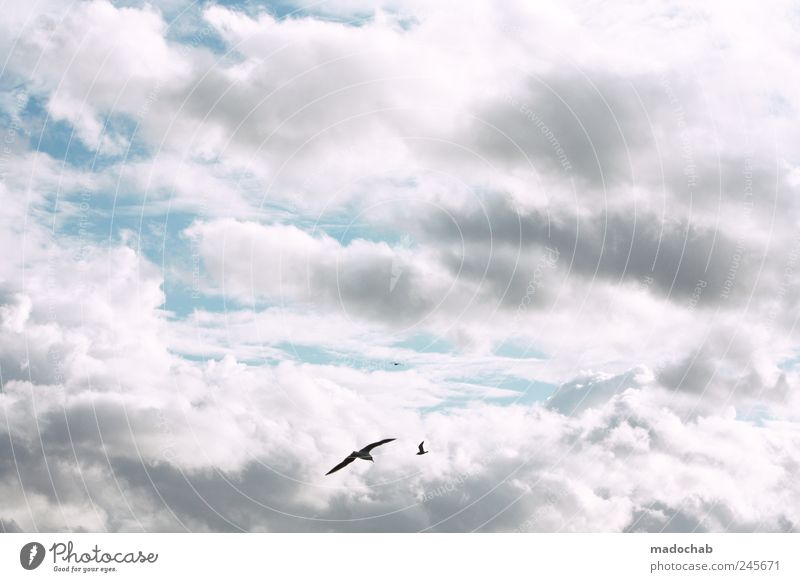 Sky Nature Joy Summer Clouds Freedom Happy Environment Bird Contentment Esthetic Hope Peace Kitsch Serene Sky only
