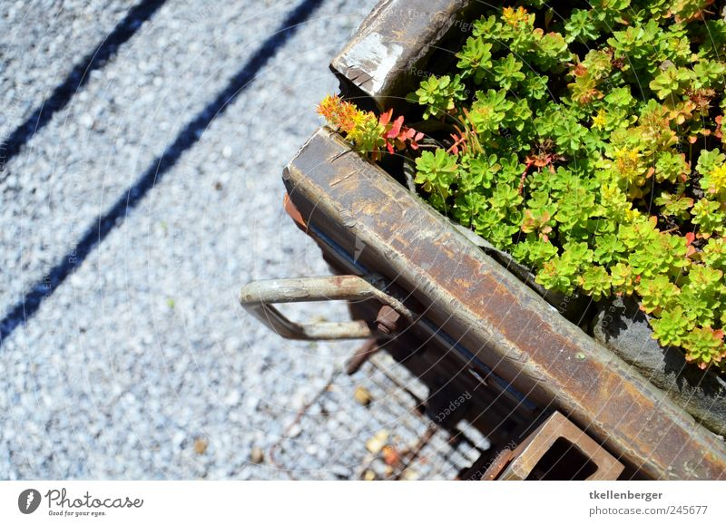 industrial garden Industry Esthetic Railroad Railroad car wagon Plant Railroad tracks Gravel Going Trash recycling Tricorn Basel Colour photo Exterior shot