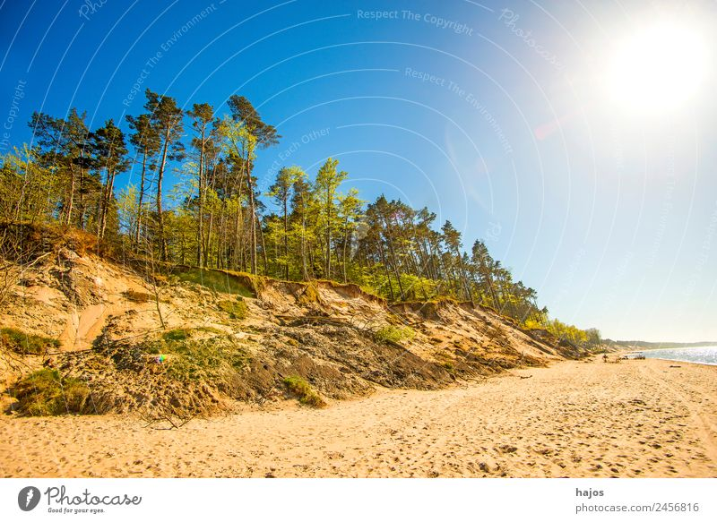 Beach at the Polish Baltic Sea coast Vacation & Travel Nature Sand Tree Reef Tourism dunes trees Back-light Sun Som Bright Sandy beach Empty Loneliness Wild