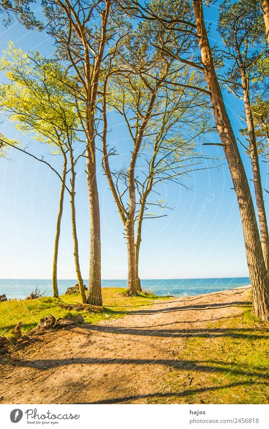 Baltic Sea coast in Poland Vacation & Travel Beach Sand Tree Reef Tourism Dune trees Ocean Blue Sky farsightedness naturally Orchzechovo Nature reserve Summer