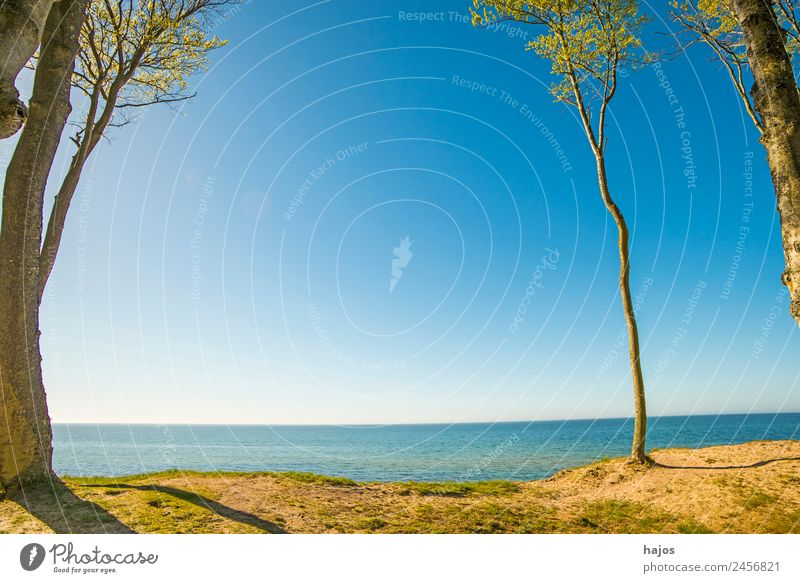 Baltic Sea coast in Poland Beach Nature Tourism east coast dunes trees Sky Blue Sand Water Beautiful wi Lonely paradise Caribbean Colour photo Exterior shot