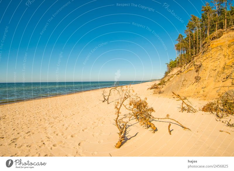Baltic Sea beach in Poland Vacation & Travel Beach Sand Bay Reef Ocean Wild Blue Yellow Baltic beach Lonely Caribbean Beach dune Forest Blue sky Natural