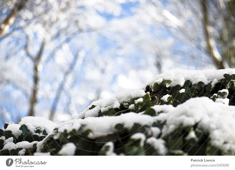 Last Christmas Beautiful Winter Snow Environment Nature Plant Elements Air Weather Forest Fresh Cold Blue White Moody Esthetic Relaxation Freedom