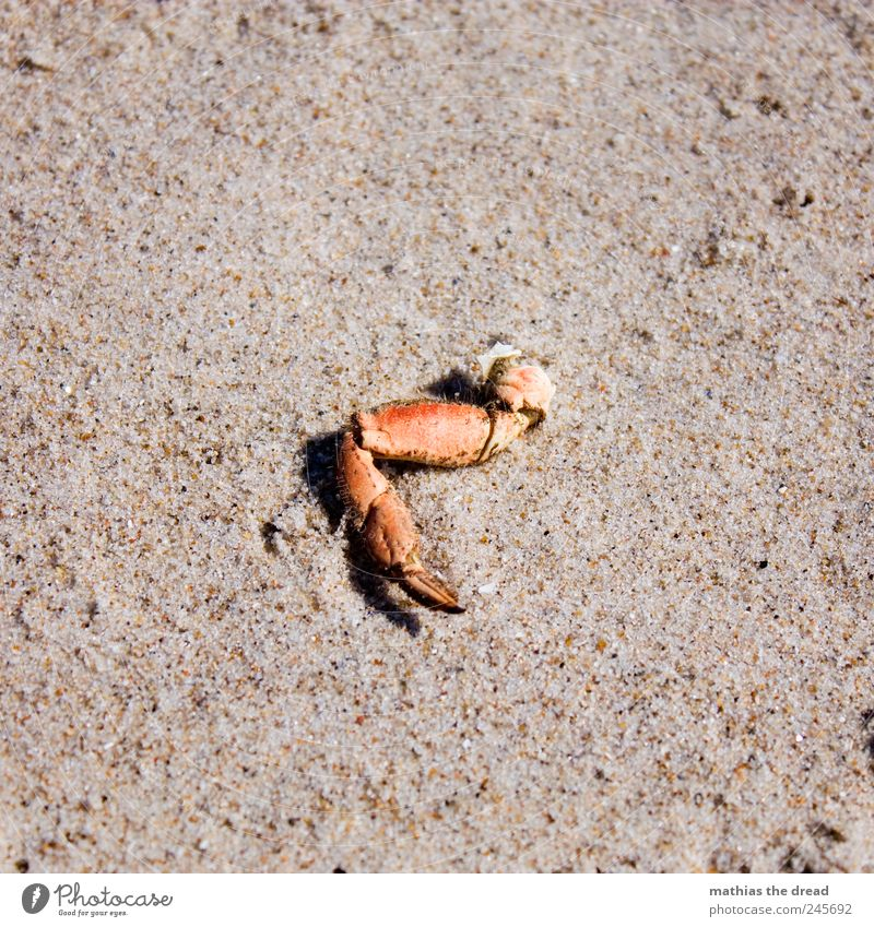 Nature Red Beach Animal Death Landscape Sand Environment Legs Gloomy Dry Beautiful weather Claw Parts of body Shrimp Flotsam and jetsam