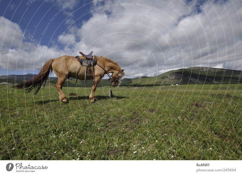 Wind in your hair Mountain Ride Equestrian sports Nature Landscape Animal Sky Summer Beautiful weather Hill Steppe Horse 1 Breathe Hiking Free Infinity Mongolia