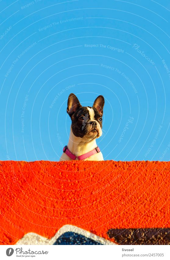 nice dog on the beach,france Relaxation Sun Beach Ocean Sky Clouds Rock Coast Lighthouse Pet Dog To enjoy Sunset France Basque Country euskal herria baske