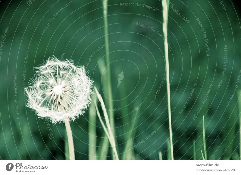 flower blow.... Plant Air Grass Blossom Energy Colour photo Exterior shot Detail Macro (Extreme close-up) Copy Space right Copy Space top Day