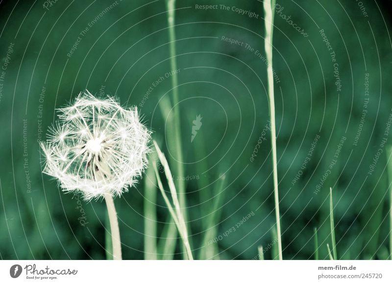 Plant Blossom Grass Air Energy