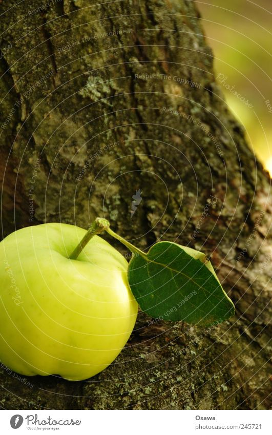 apple Food Apple Organic produce Nature Plant Tree Leaf Agricultural crop Tree trunk Tree bark Healthy Green Fresh Vitamin Brown Structures and shapes