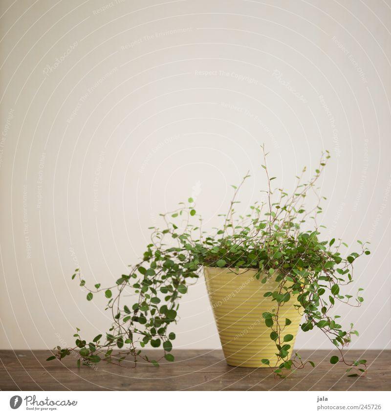 houseplant Flat (apartment) Decoration Table Plant Pot plant Esthetic Flowerpot Colour photo Interior shot Deserted Copy Space left Copy Space top