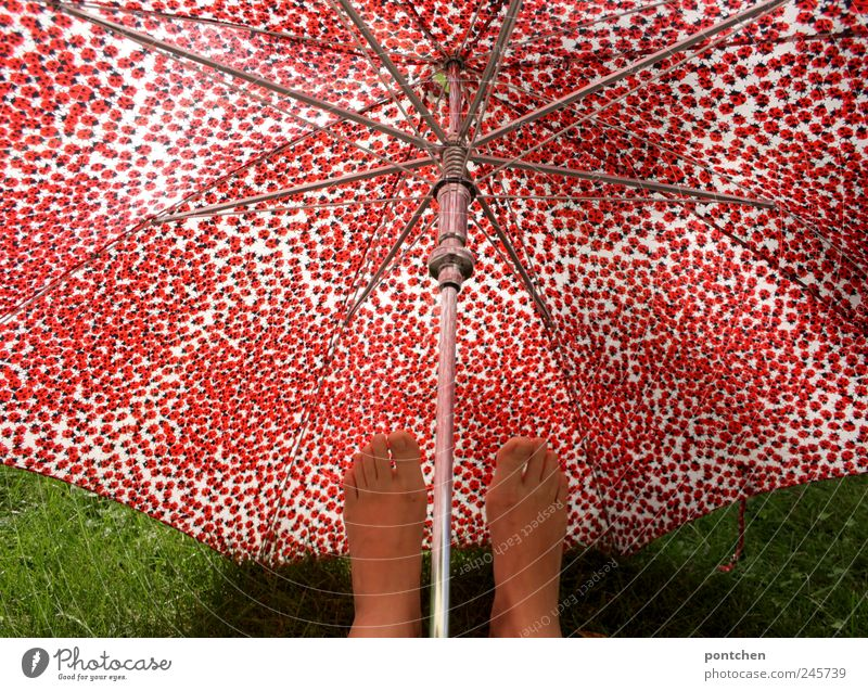 Humor. Woman holding feet under red patterned umbrella Accessory Umbrella Hip & trendy Ladybird Red green Grass Protection Athlete's foot Climate change