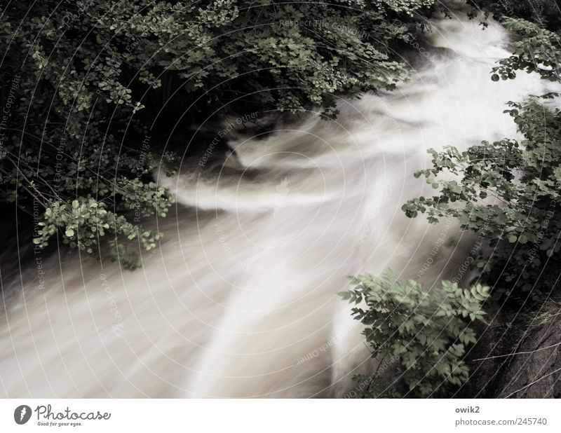 Nature Water Tree Plant Leaf Forest Cold Movement Landscape Environment Waves Power Climate River Threat Natural