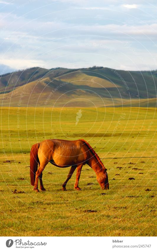 Landscape of horse on the grasslands Sky Nature Blue Green Summer Vacation & Travel Clouds Loneliness Animal Far-off places Yellow Meadow Freedom Environment Mountain Landscape