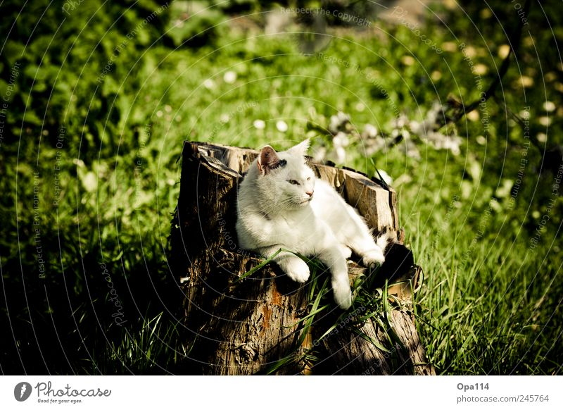 Nature Green White Plant Summer Animal Black Meadow Environment Landscape Wood Garden Grass Cat Park Weather