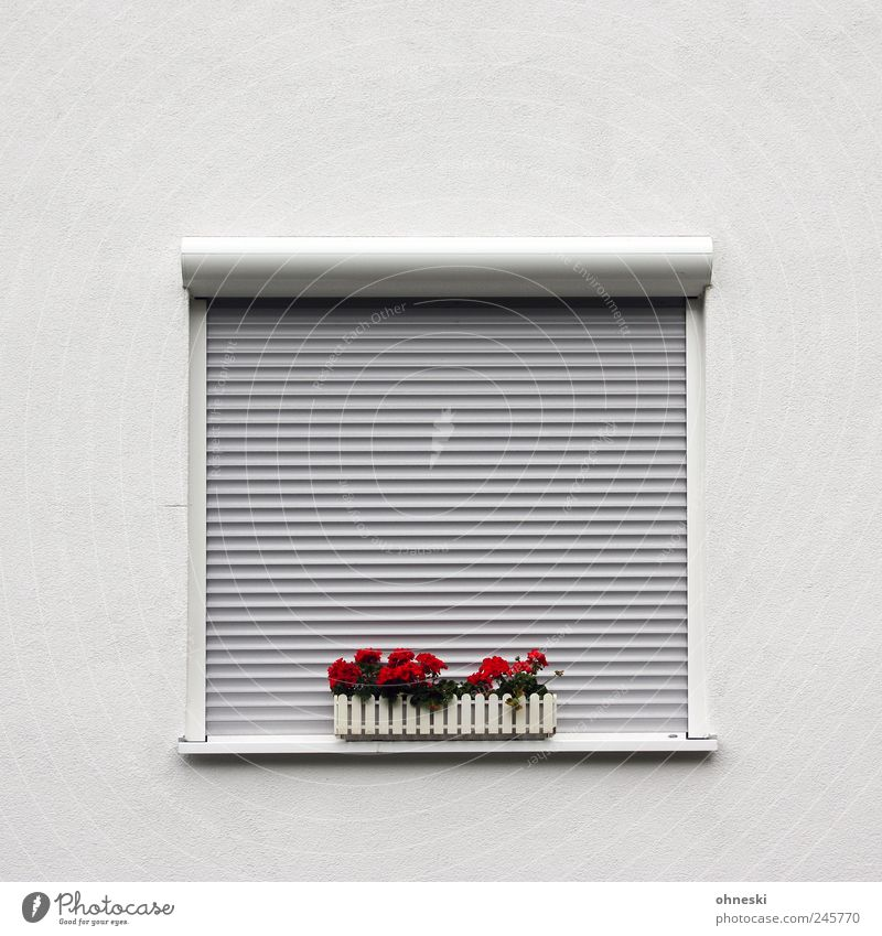 Red Flower Loneliness House (Residential Structure) Wall (building) Window Wall (barrier) Facade Arrangement Closed Sleep Fatigue Venetian blinds Detached house