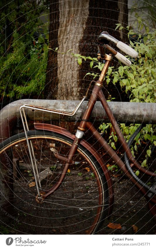 chameleon-bike Leisure and hobbies Trip Plant Tree Bushes Stand Old Dirty Dark Thin Trashy Rust Lean Loneliness Bicycle Brown Means of transport Adequate