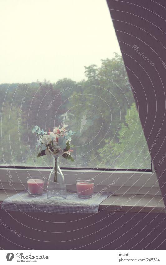 Plant Flower Window Garden Candle Decoration Kitsch Bottle Bouquet