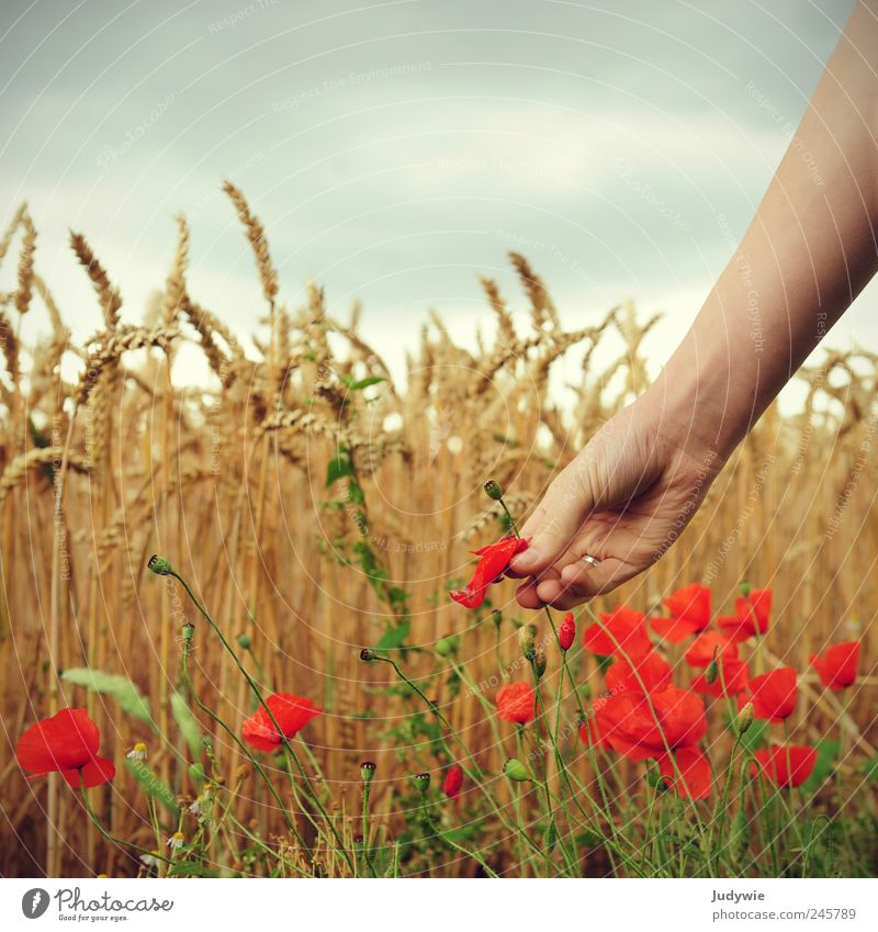 The flower picker Grain Beautiful Harmonious Well-being Calm Summer Human being Arm Hand Environment Nature Sky Clouds Storm clouds Wind Gale Plant