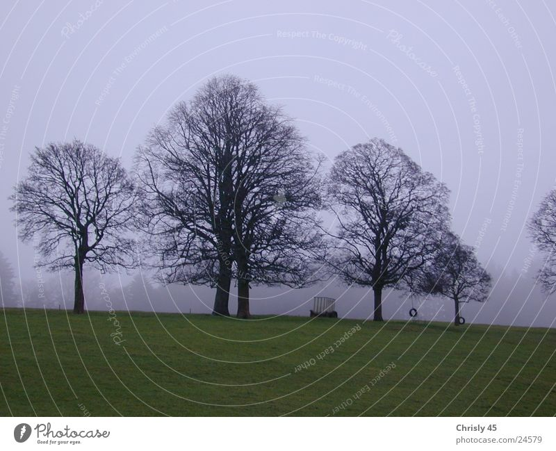 Trees in autumn Autumn Fog Loneliness Meadow Sky